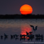 Sea, sun, sunset, reflections and birds