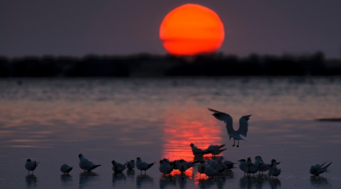 Sea, sun, sunset, reflections and birds!